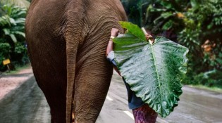 00122_17, Sri Lanka, 1995, SRILANKA-10075NF2. A young man walks behind an elephant.Coffee_Bookretouched_Sonny Fabbri 10/15/2014